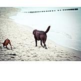 Sea, Dog, Dog beach
