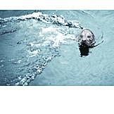 Animals, Seal, Seal