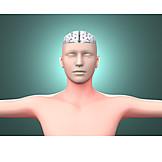 Intelligenz, Gehirn, Neurologie, Medizinische Grafik