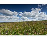 Meadow, Flower meadow