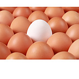 Individuality & Uniqueness, Egg, Chicken Egg
