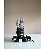 Camera, Photography, Analog