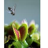 Gefahr & Risiko, Fliege, Venusfliegenfalle