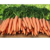 Carrot, Harvest