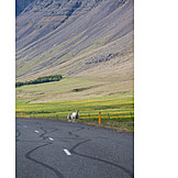 Danger & risk, Sheep, Tire track