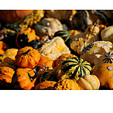 Harvest, Pumpkin Harvest