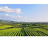 Vineyards, Bühl