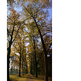 Park, Autumn, Alley