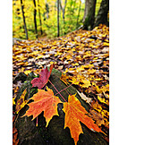 Forest, Autumn, Autumn leaves, Forest