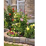 Garden, Front Garden, Rose Garden , Rose Shrub