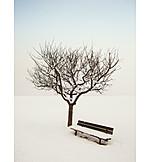Tree, Winter, Silence, Bench