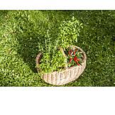 Herb, Harvest, Domestic Farming