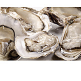 Oysters, Clam