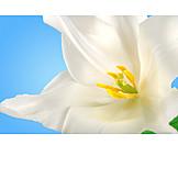 Flower, Spring, Tulips Bloom