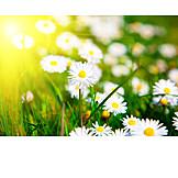 Environment Protection, Environment, Spring, Daisy