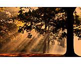 Sunlight, Forest, Autumn