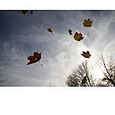 Wind, Storm, Autumn Wind