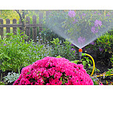 Garden, Watering, Sprinklers