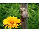 Garden, Snail