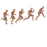 Jump, Anatomy, Medical Illustrations