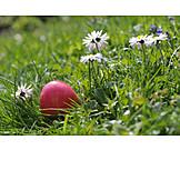 Easter, Flower Meadow, Easter Egg