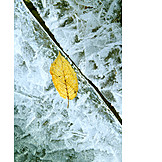 Winter, Leaf, Ice, Frost