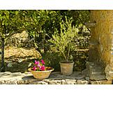 Garden, Mediterran