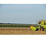 Agriculture, Harvest, Grain Harvest