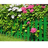 Garden, Hydrangea, Garden Fence