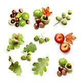 Autumn, Chestnut Tree, Tree Fruit, Acorn