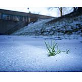 Grass, Snow, Spring