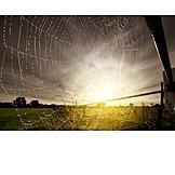 Spider web, Dewdrop
