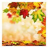 Copy space, Autumn, Autumn leaves, Maple tree