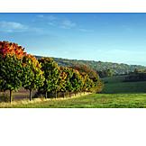 Landscape, Autumn