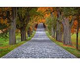 Footpath, Autumn, Alley