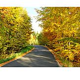 Autumn, Road