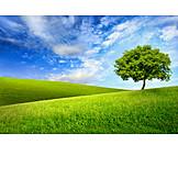 Landschaft, Natur, Wiese, Jahreszeit