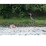 Wildlife, Safari, Egret