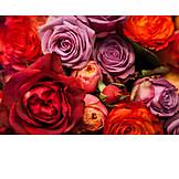 Bouquet, Rose petals, Rose bouquet