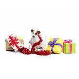 Christmas, Dog, Gift