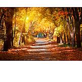 Park, Herbst, Baumallee