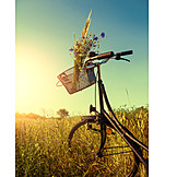 Meadow, Bicycle, Wild Flower