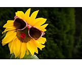 Summer, Sunflower, Sunglasses