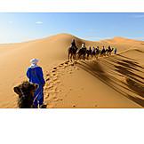 Sahara, Tour, Caravan, Camel train