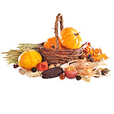 Still Life, Squash, Thanksgiving, Autumn Decoration