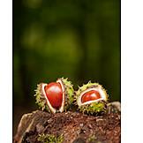 Autumn, Chestnut Tree, Chestnut Shell