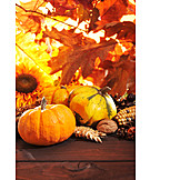 Autumn, Squash, Harvest Festival, Thanksgiving