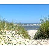 Sea, Sandy, Marram Grass
