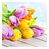 Tulpenstrauß, Muttertag