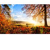 Autumn, Autumn Leaves, Autumn, Wooden Bench